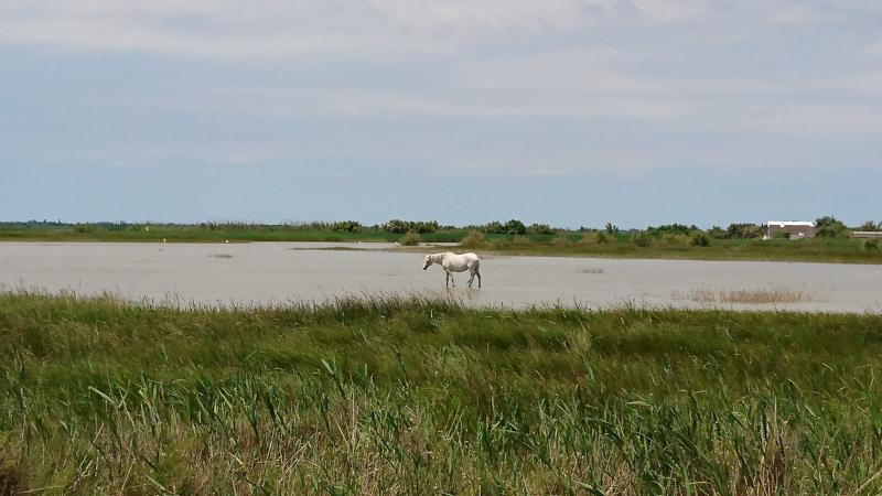 Kajaky na řece Ardeche
