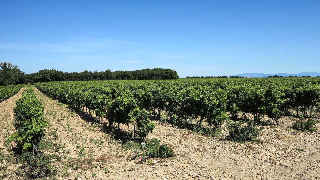 Vinice Châteauneuf-du-Pape
