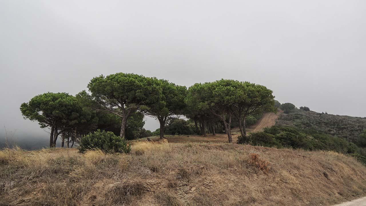 Pěší procházka - Elba