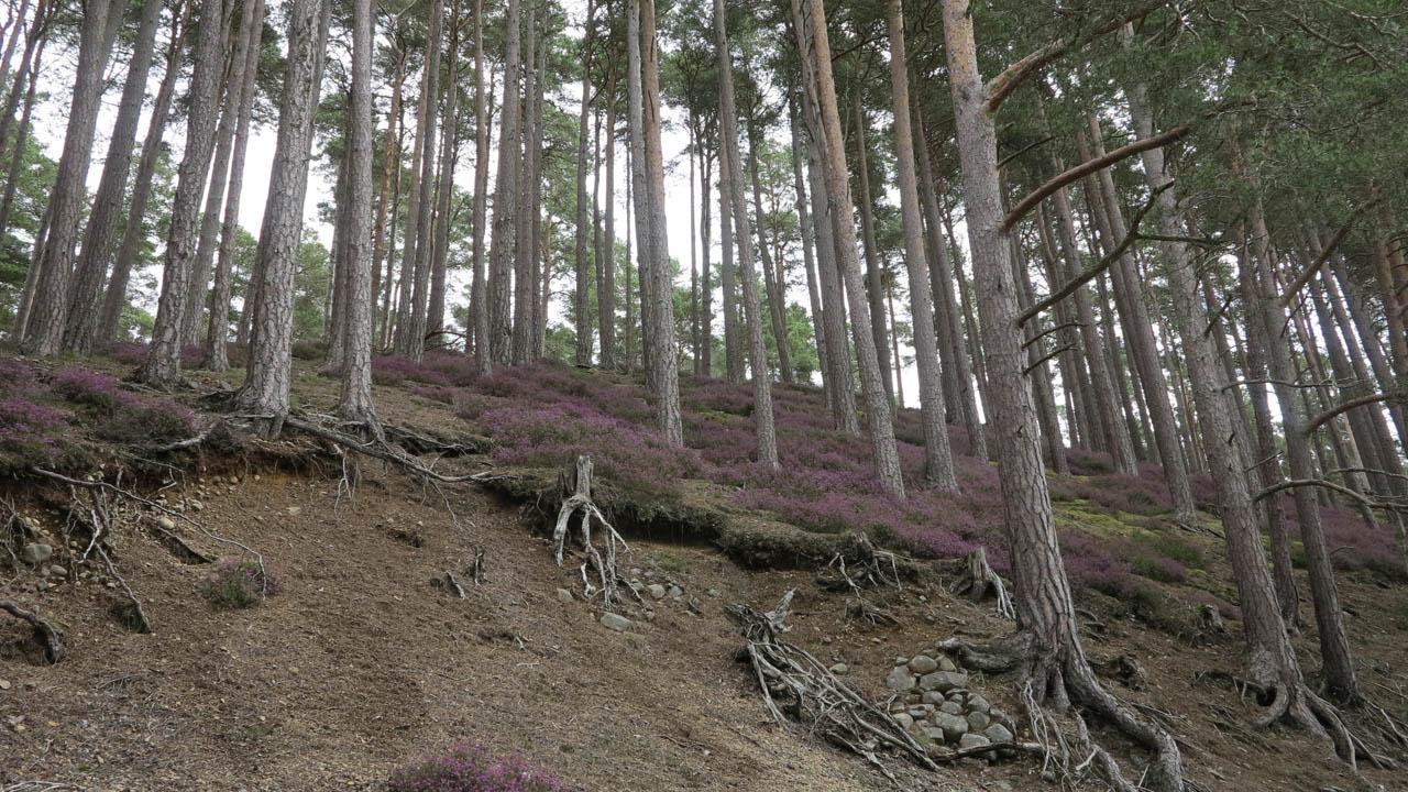 Skotské lesy - Skotsko na kole